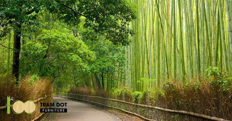 lịch sử hình thành và phát triển cây tre Việt Nam